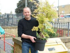 Memorial Garden - a new Acer tree.