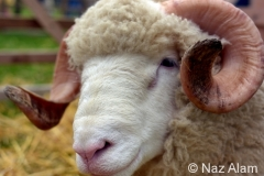 Trawden_Agricultural_Show_2016_11