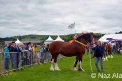 Trawden_Agricultural_Show_2016_14