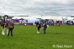 Trawden_Agricultural_Show_2016_15